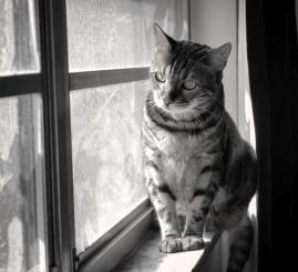 Mia on windowsil b&w