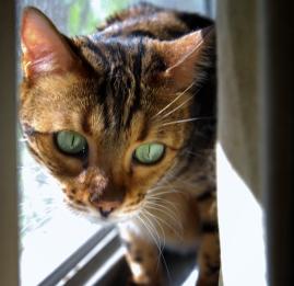 Mia peering