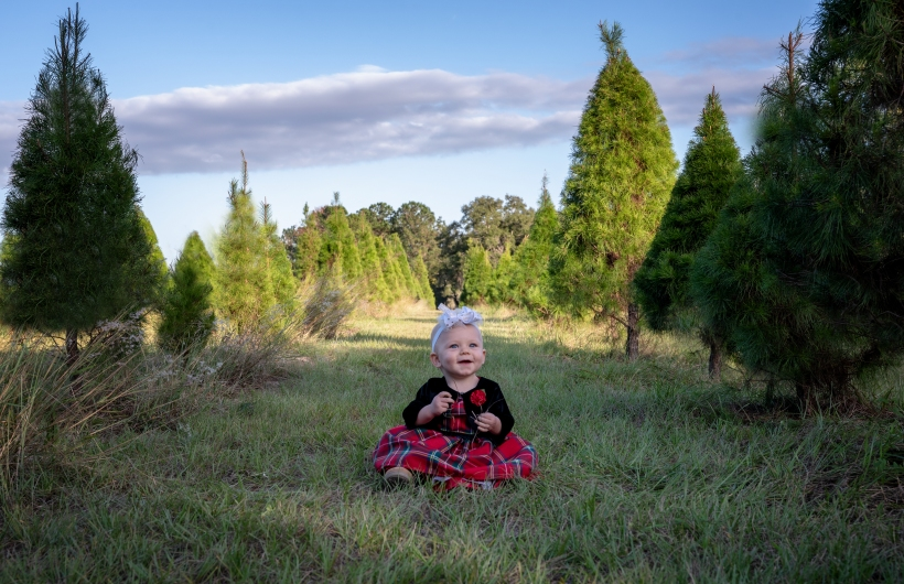 Farner babycakes tree farm VI